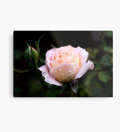 Roses in my Garden Metal Print