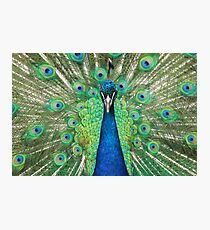 Proud as a Peacock Photographic Print