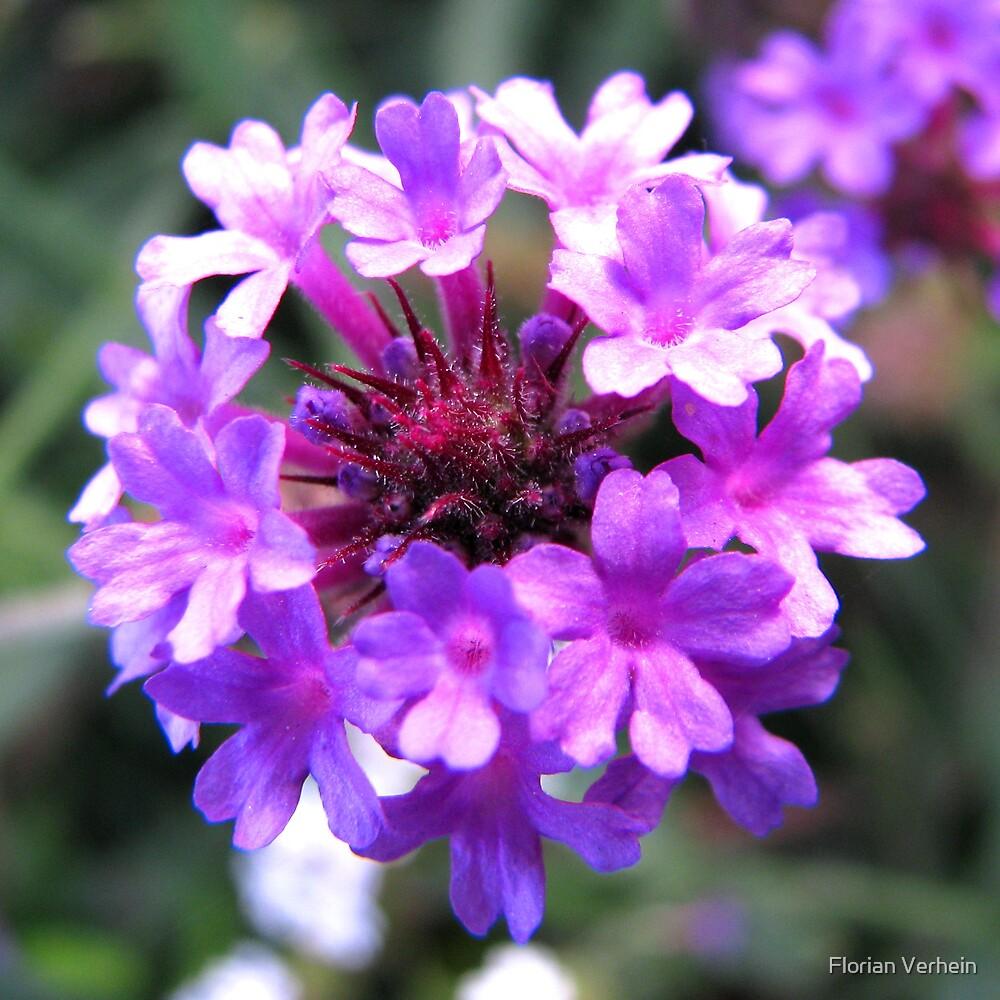 flower by Florian Verhein
