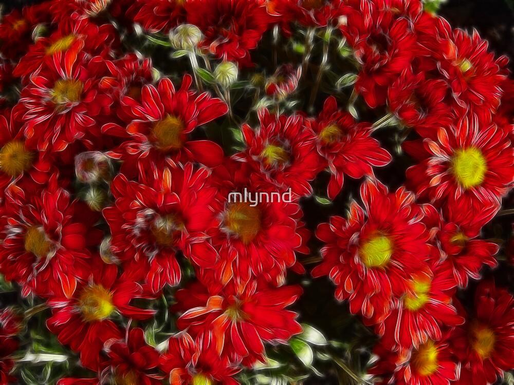 RED MUMS by mlynnd