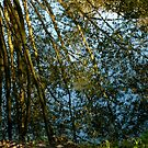 Reflections II by newbeltane