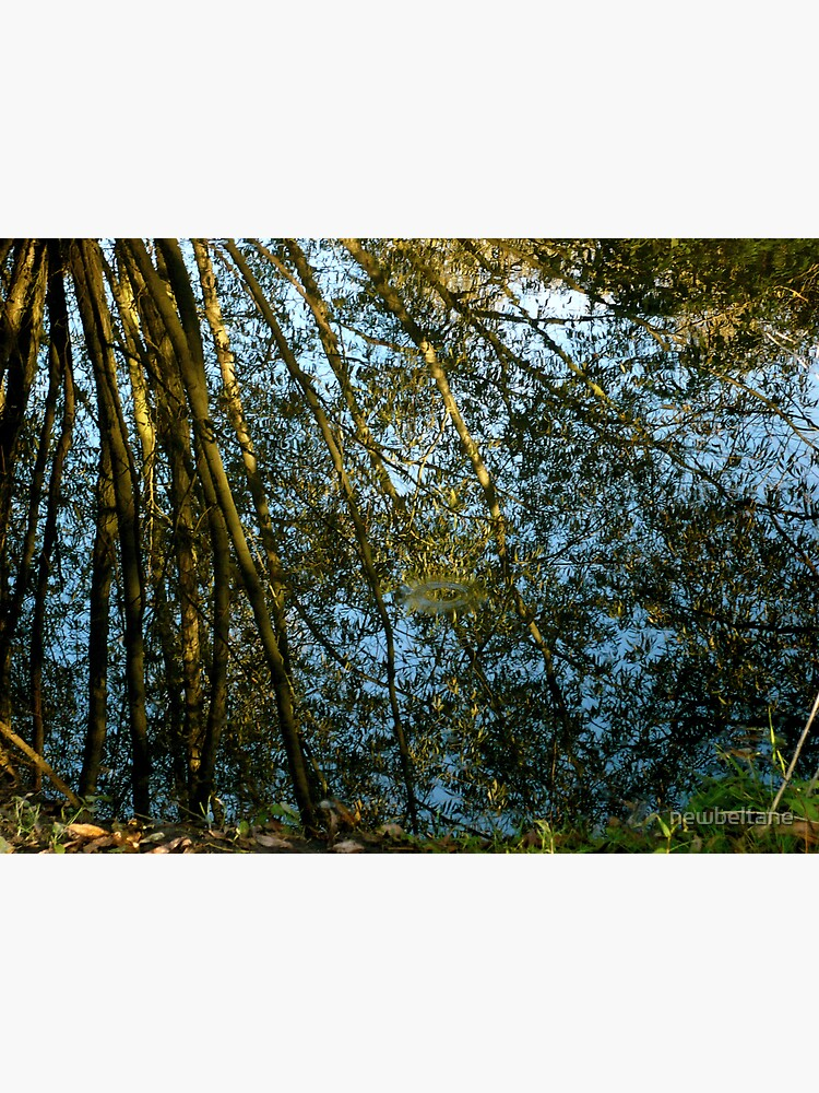 Reflections II by newbeltane