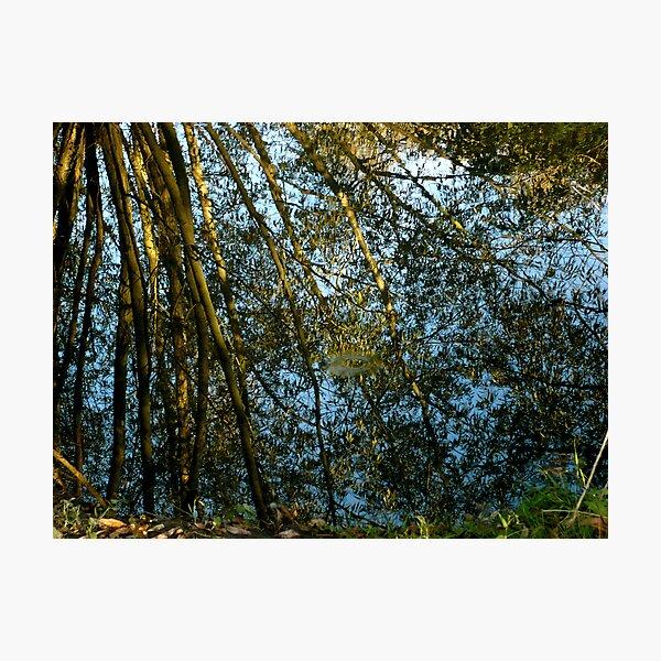 Reflections II Photographic Print
