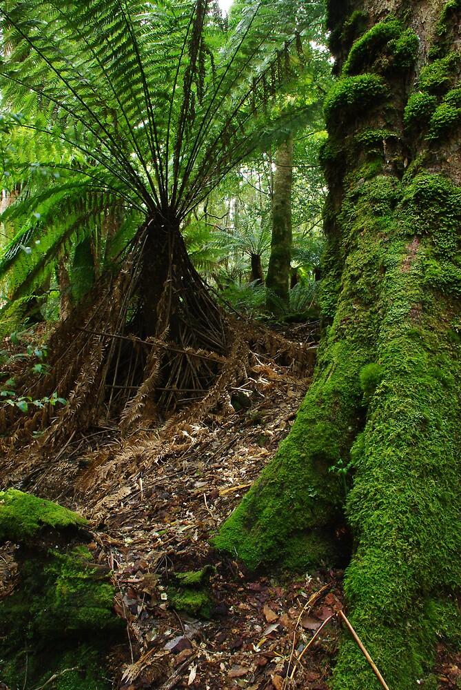 Liffey rainforest by Greg Eyre