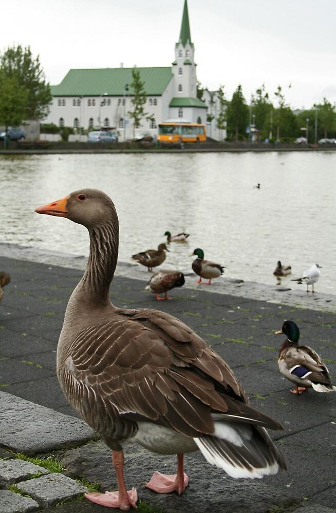 Greylag Goose by Karen Millard