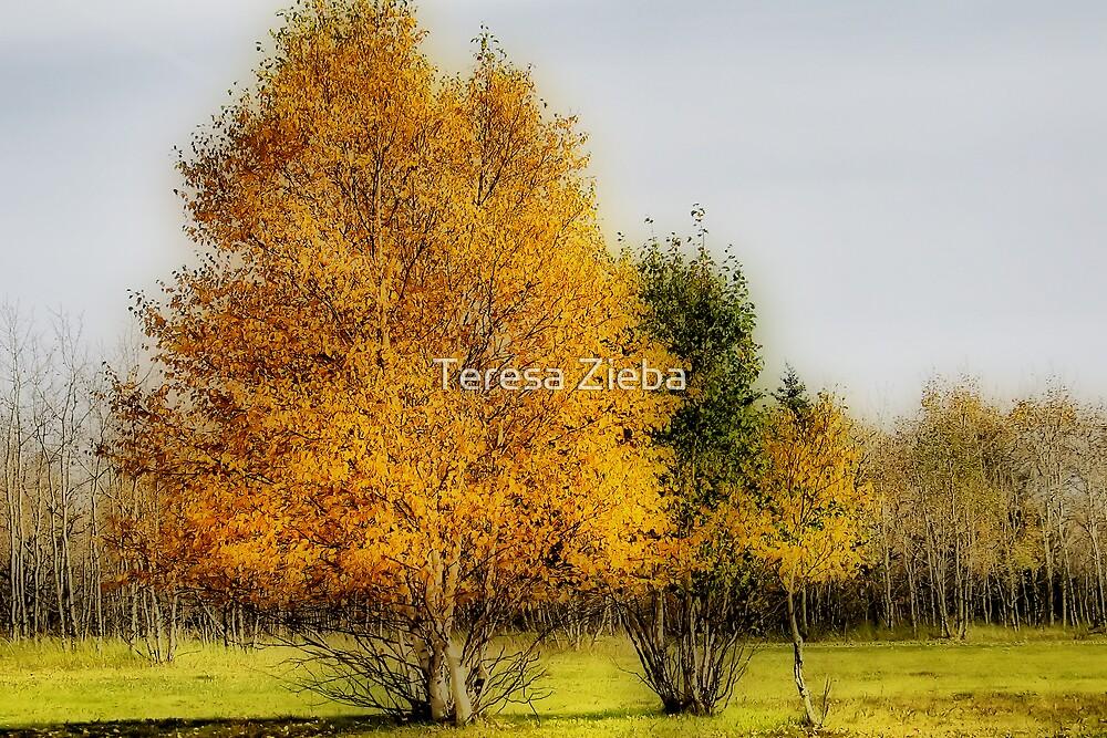 Fall Colours by Teresa Zieba