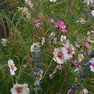Wildflowers by MDossat