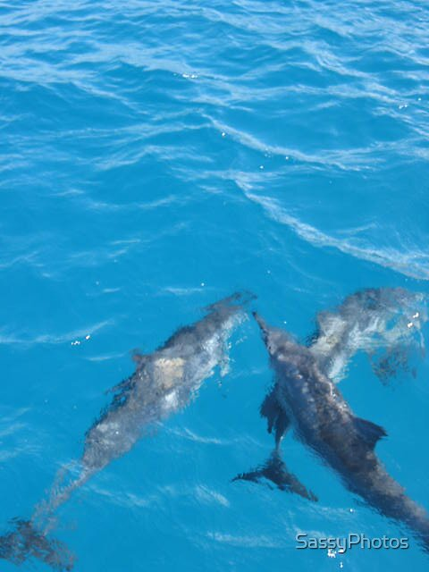 Dolphins Hawaii by SassyPhotos