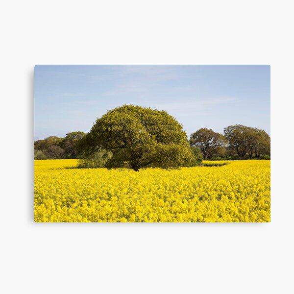 Rapeseed Field Canvas Print