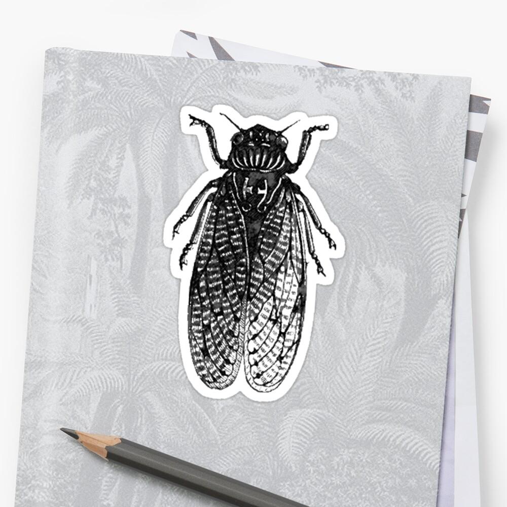 Cicada Bug by Zehda