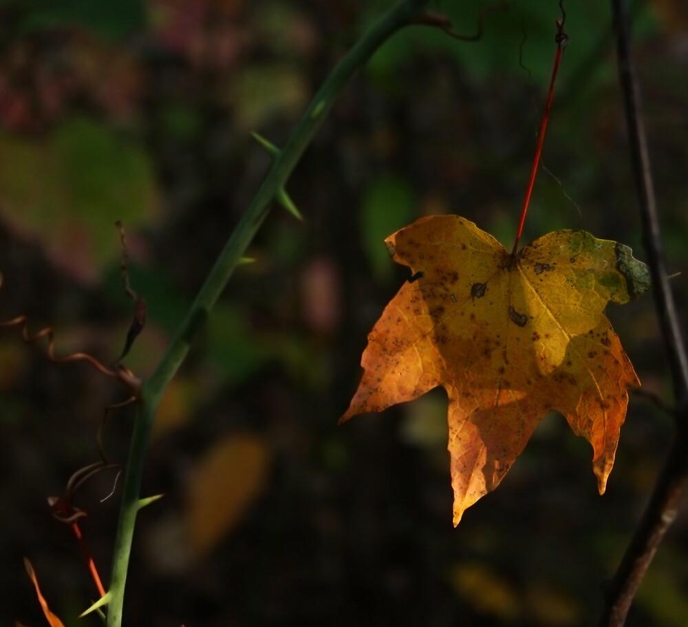 fall 2 by krystledawn