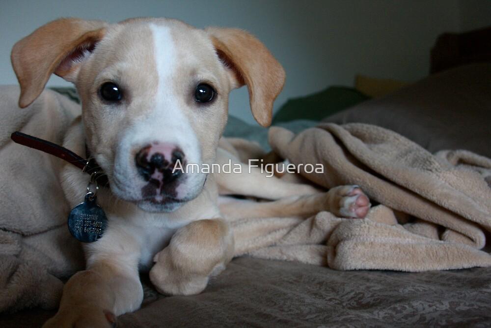 Pup by Amanda Figueroa