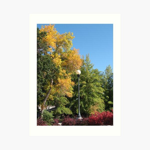 Fall in Reno Art Print