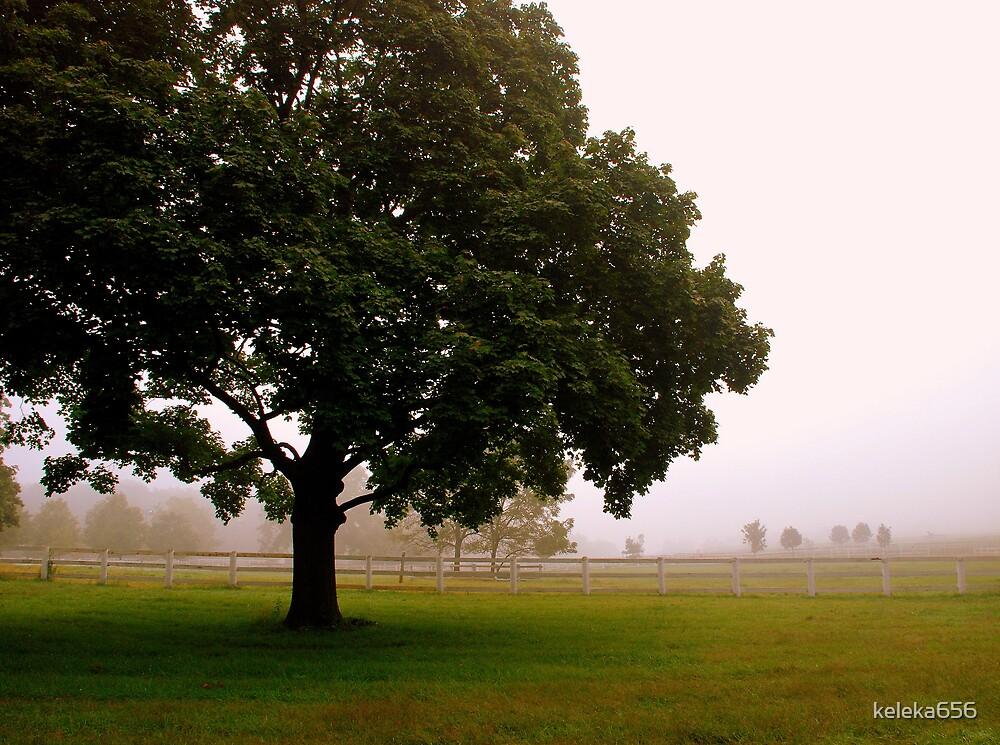 Farm Fog  by keleka656
