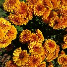 Mums by Taylor T