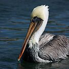 Perfect Pelican by Jan  Wall