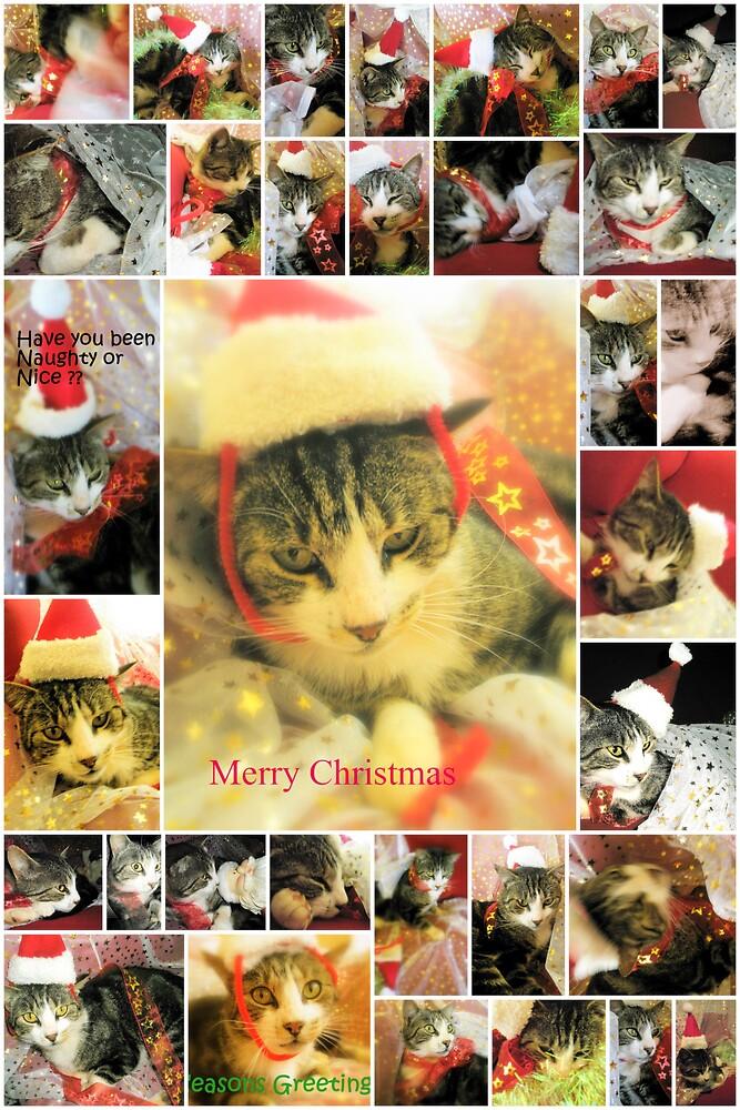 Cheeky Cat Christmas card by Melissa Park