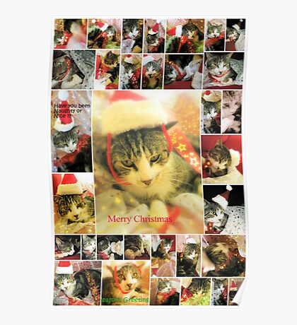Cheeky Cat Christmas card Poster