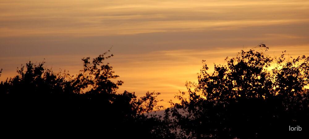 Sunset Trees by lorib