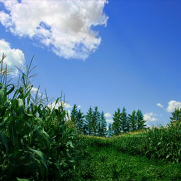 In The corn Field by mikej