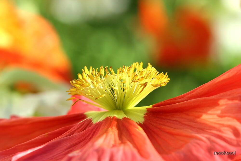 side on poppy by mooksool