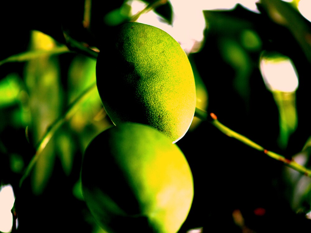 Mangos by Andrew Morrison