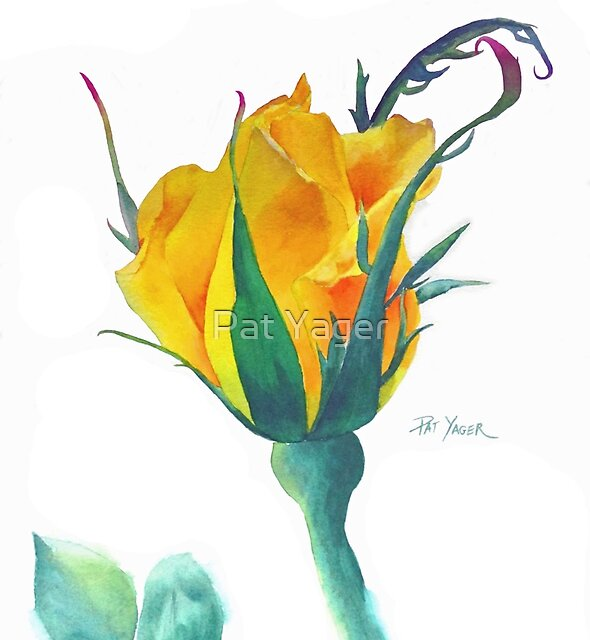 Radiant Perfume Rosebud by Pat Yager