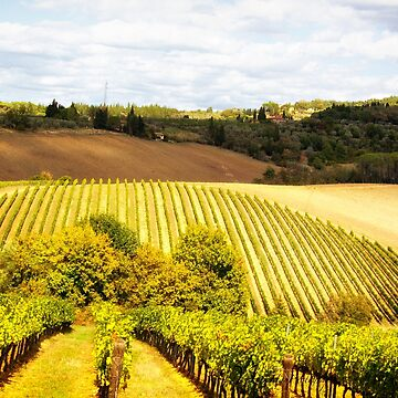 Tuscany, Wine Country - Italy by Photograph2u
