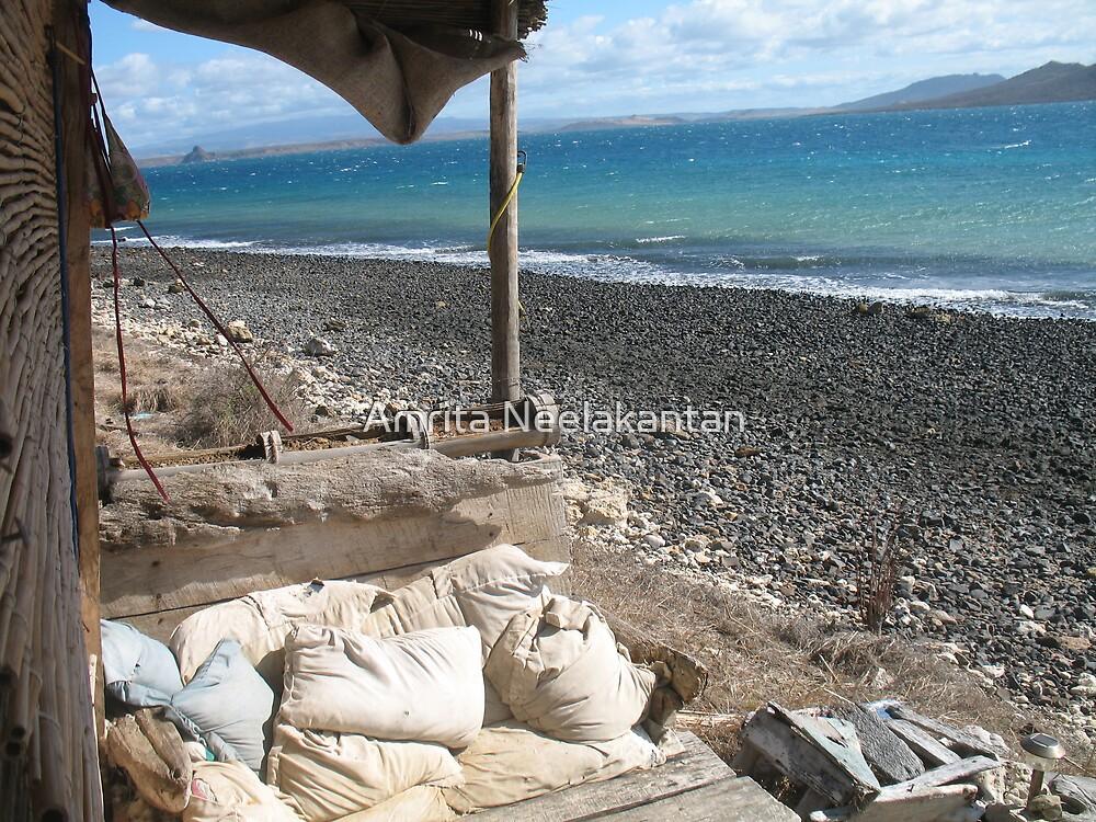 Manta (Marine Camp Madagascar) by Amrita Neelakantan