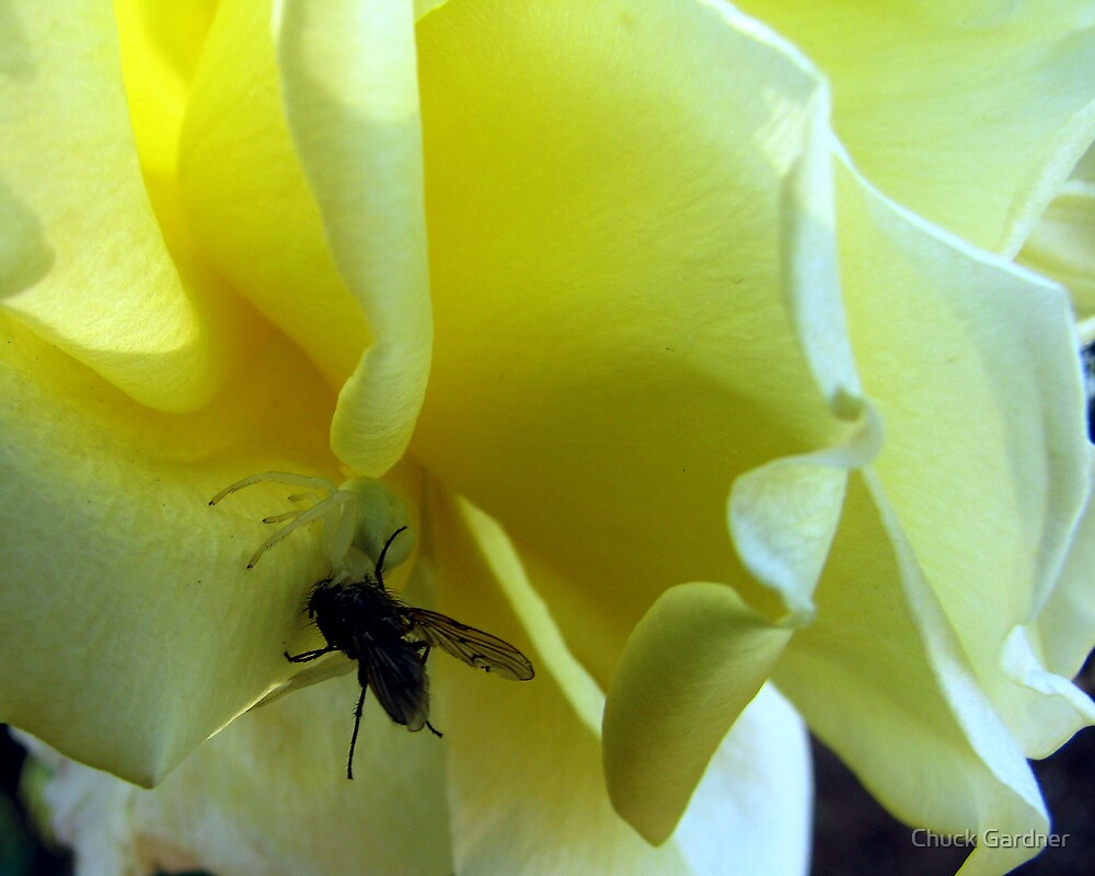 Smell My Rose Will You! by Chuck Gardner