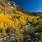 Bishop South Fork Fall Colors 2017 by photosbyflood