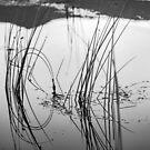Reflection by photosbyflood