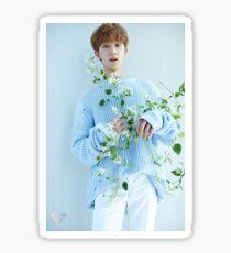 Seventeen The8/Minghao Teen, Age Sticker