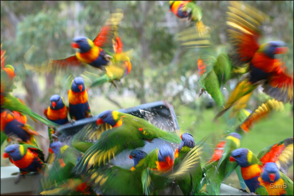 Colourful Cacophony by SamB