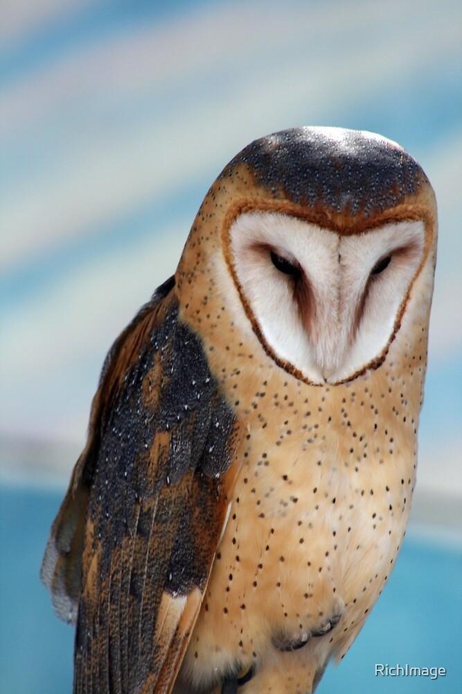 portrait of a barn owl 2 by RichImage