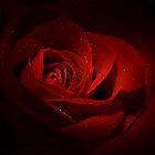 Sparkling Red Rose by Lori Deiter