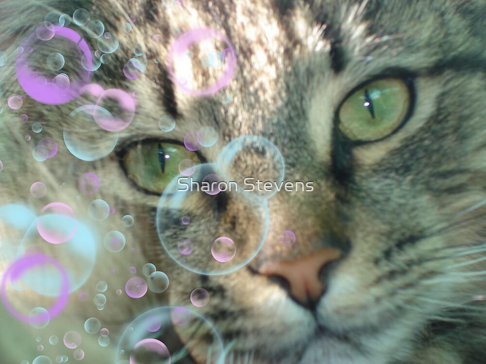 Bubbles by Sharon Stevens