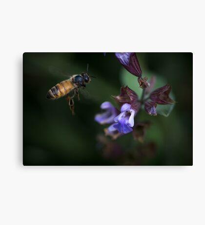 Sage and Honey Canvas Print