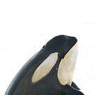 Orca Spyhop 2 von Marlene Watson