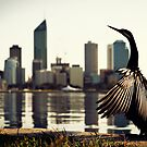 Darter and Perth skyline by Martin Pot