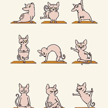 Sphynx Cat Yoga de Huebucket
