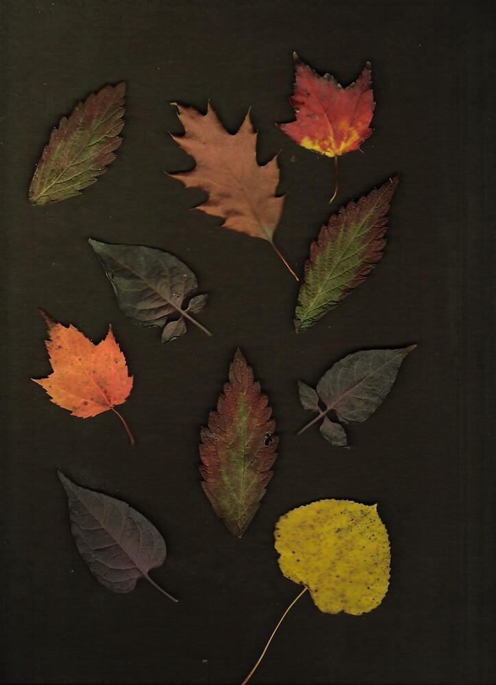 Autumn Leaf Collection 13 by Gene Cyr