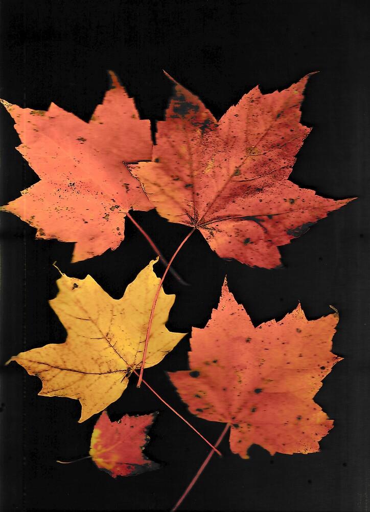 Autumn Leaf Collection 15 by Gene Cyr