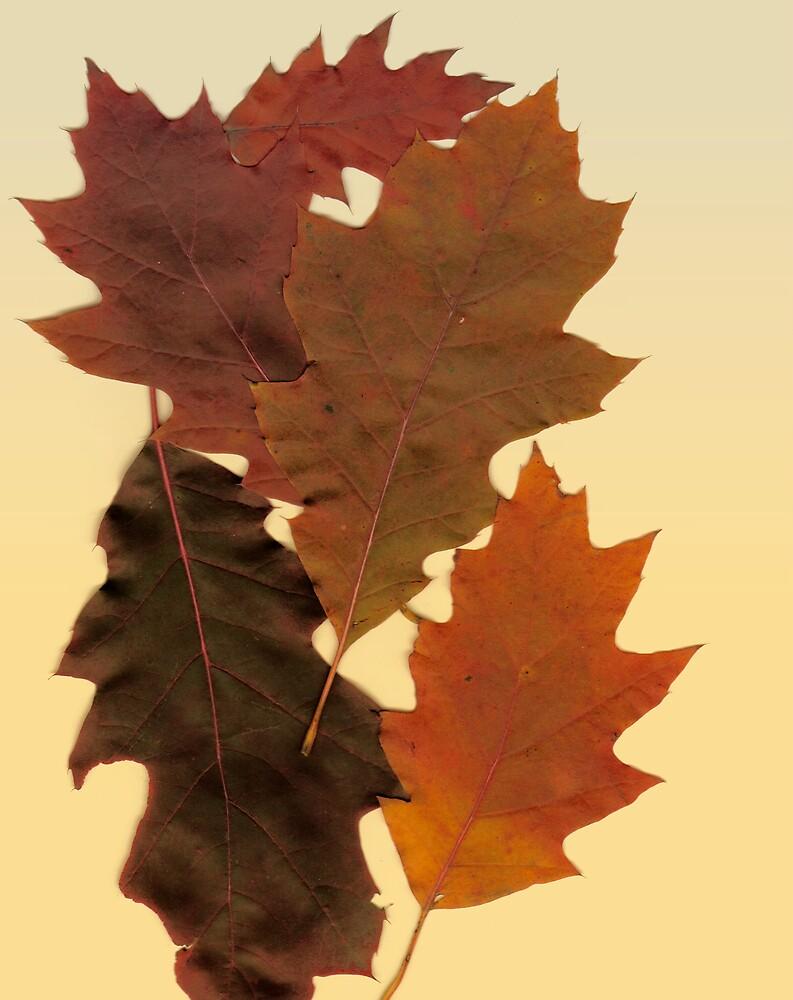 Autumn Leaf Collection 16 by Gene Cyr
