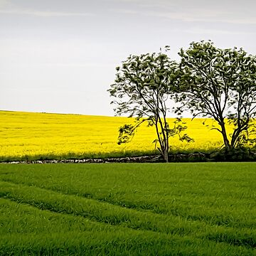 Scottish Field by MarylouBadeaux