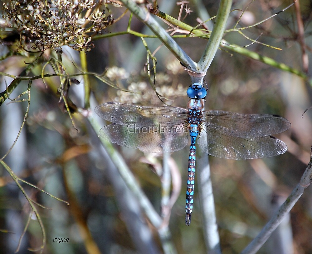 Damselfly Deva by Cherubtree