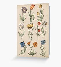 Flower illustrations Greeting Card