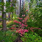 Yosemite Dogwood Fall by photosbyflood