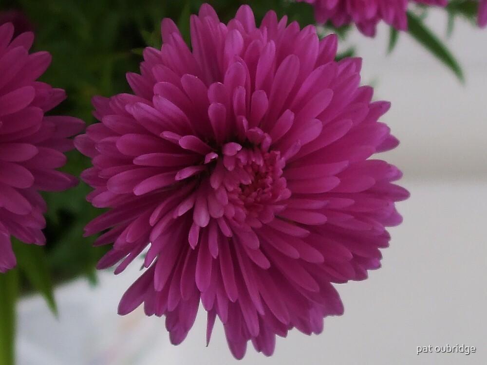 Purple Beauty by pat oubridge