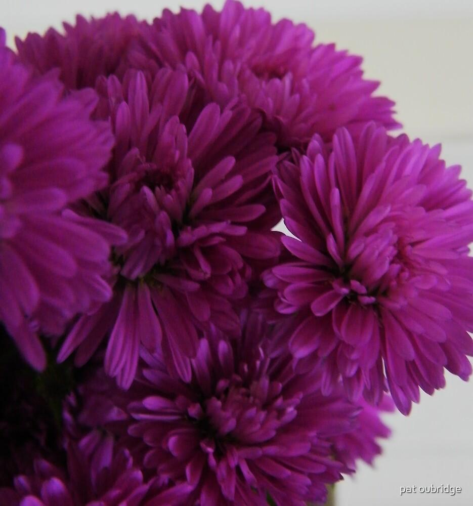 Purple Posie by pat oubridge